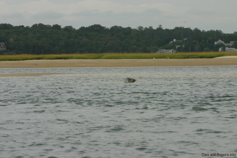 Seal in Salt Pond Bay