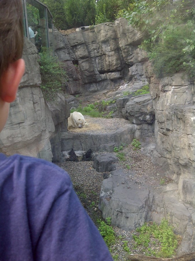 Gus the polar bear